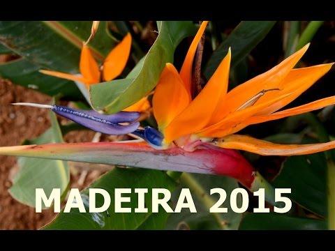 REIZEN Madeira 2015