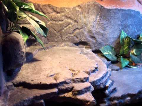 bearded dragon home DIY vivarium terrarium (part1 and 2)