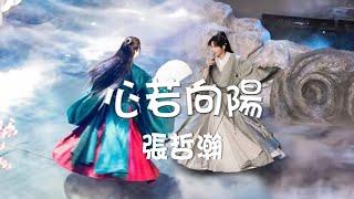 Download 張哲瀚Zhang Zhehan 【心若向陽】歌詞 搭配採訪