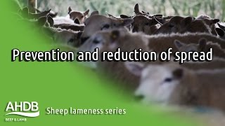 Prevention and reduction of spread - Sheep Lameness series