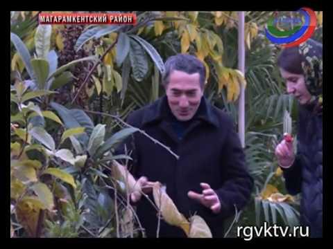 Проститутки Екатеринбурга и индивидуалки