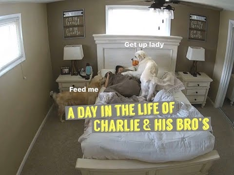 A Day In The Life Of Charlie & His Brothers