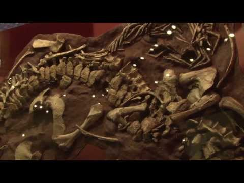 Texas Tech University Scientists Discover Prehistoric Crocodile Species