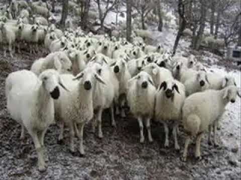 Sazcı hüso - uyan çoban uyan