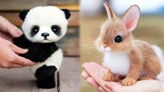 Animals SOO Cute! Cute baby animals Videos Compilation cutest moment of the animals #9 YouTube Videos
