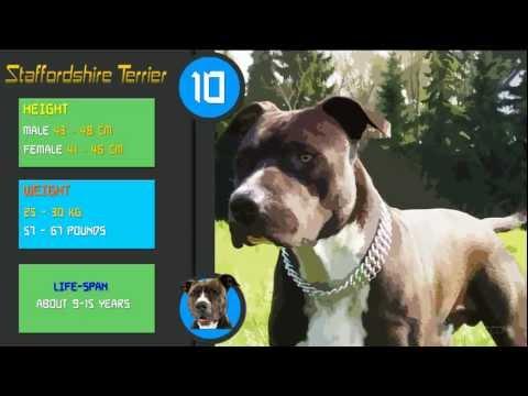 Top 10 Protective Dog Breeds (Guard)