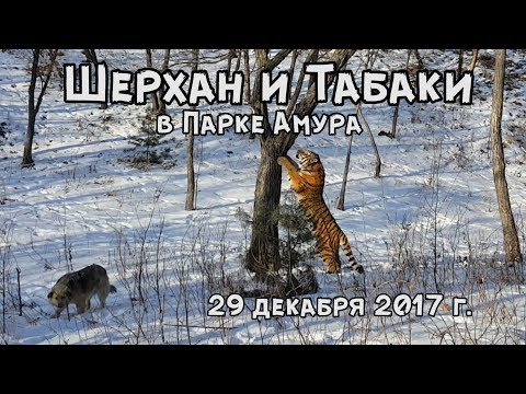ШЕРХАН И ТАБАКИ В ПАРКЕ АМУРА 29 декабря 2017 г.