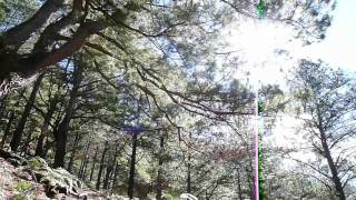 Mount Pulag via Akiki Trail: Burnt Montane Forest 2