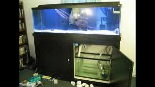 125 Gallon Aquarium - Built from beginning to completion