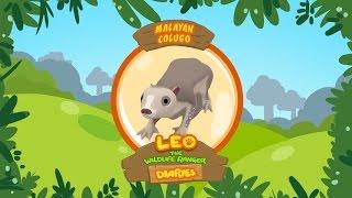 Leo The Wildlife Ranger Animal Diaries - Malayan Colugo   Learning For Kids   Cartoon