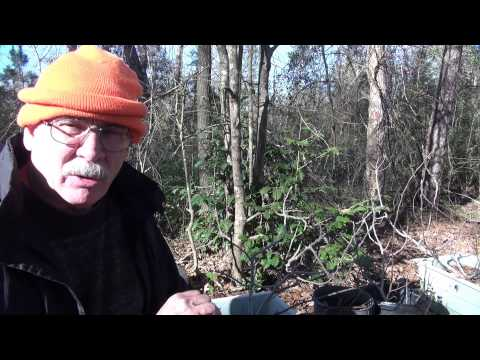 Planting fruit trees in Houston by tree doctor Master Hughes