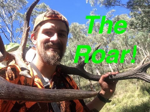 An Aussie Red Stag In The Roar! (A Dream Realised)