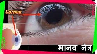 Sense Organs, भाग 1 - मनुष्य की आँख की संरचना (Human eye Structure and Function 3D)