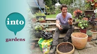 Growing daffodils with Ben Dark: Planting bulbs in pots