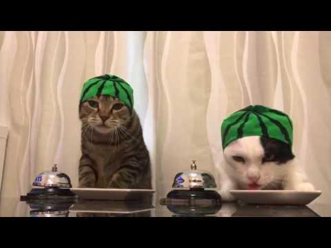 Cats wearing watermelon hats ring bells