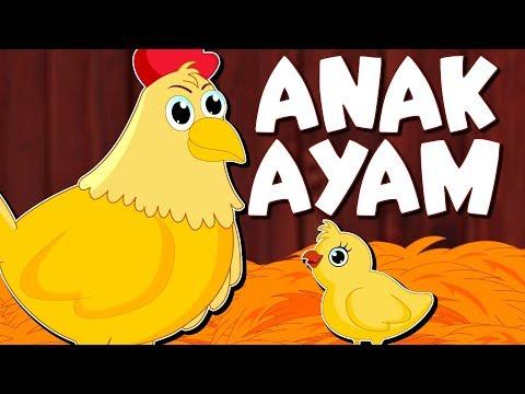 Anak Ayam | Dongeng Anak | Kartun Anak | Dongeng Bahasa Indonesia