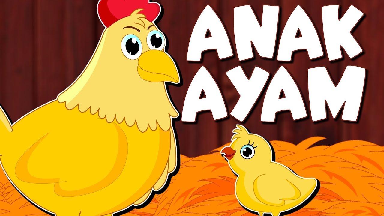 Anak Ayam Dongeng Anak Kartun Anak