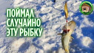 Весенняя рыбалка на Белом Море Навага попалась на пустой крючек