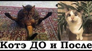 """Фотографии кошек """"тогда и сейчас"""", которые растопят ваше сердце"""