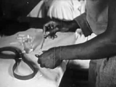 1951 Drug Abuse & Social Guidance - Subject: Narcotics - CharlieDeanArchives / Archival Footage