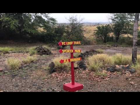 Tour Shark Temple Big Island Hawaii - Pu