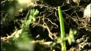 Ticho,už to roste   77 Eukalyptus, cibule šalotky, fuchsie