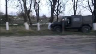Рысь лезет на дерево. Крым. Военный автомобиль рысь врезался в дерево.