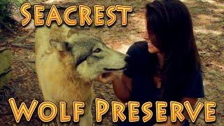 Travel: Seacrest Wolf Preserve, Chipley, Florida!!! 04.16.2016