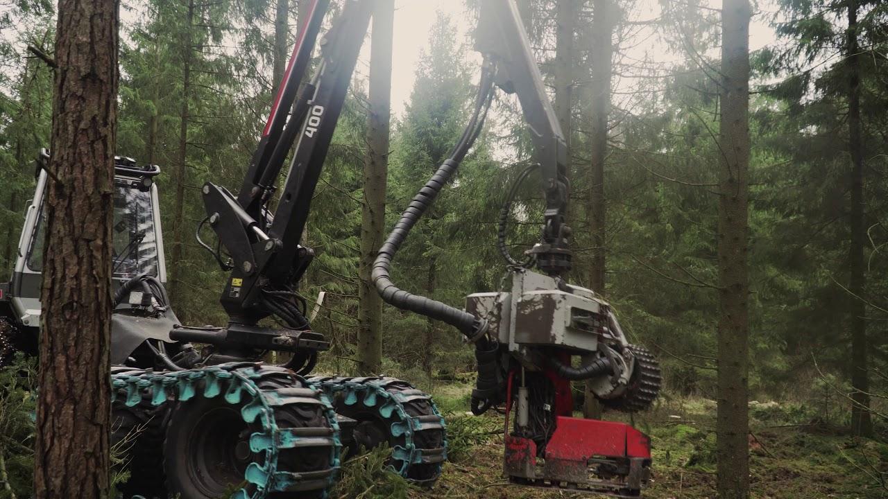 på dejt nora- skog