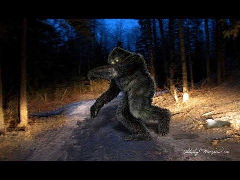 World Bigfoot Radio #71 ~ Sasquatch, too close for comfort! / Cindy Ann Goodbrake