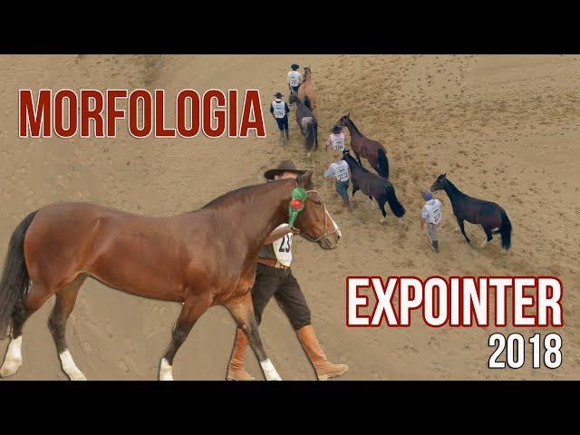 MORFOLOGIA - Expointer 2018
