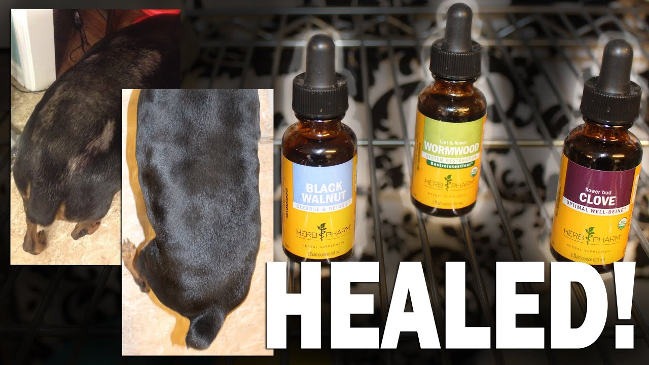 How I Healed My Dog From Mites Naturally With Herbs (Also Works For Cats)