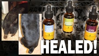 How Healed My Dog Mites Naturally Herbs Also Works Cats