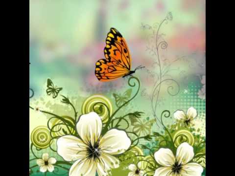 Самые красивые бабочки мира!