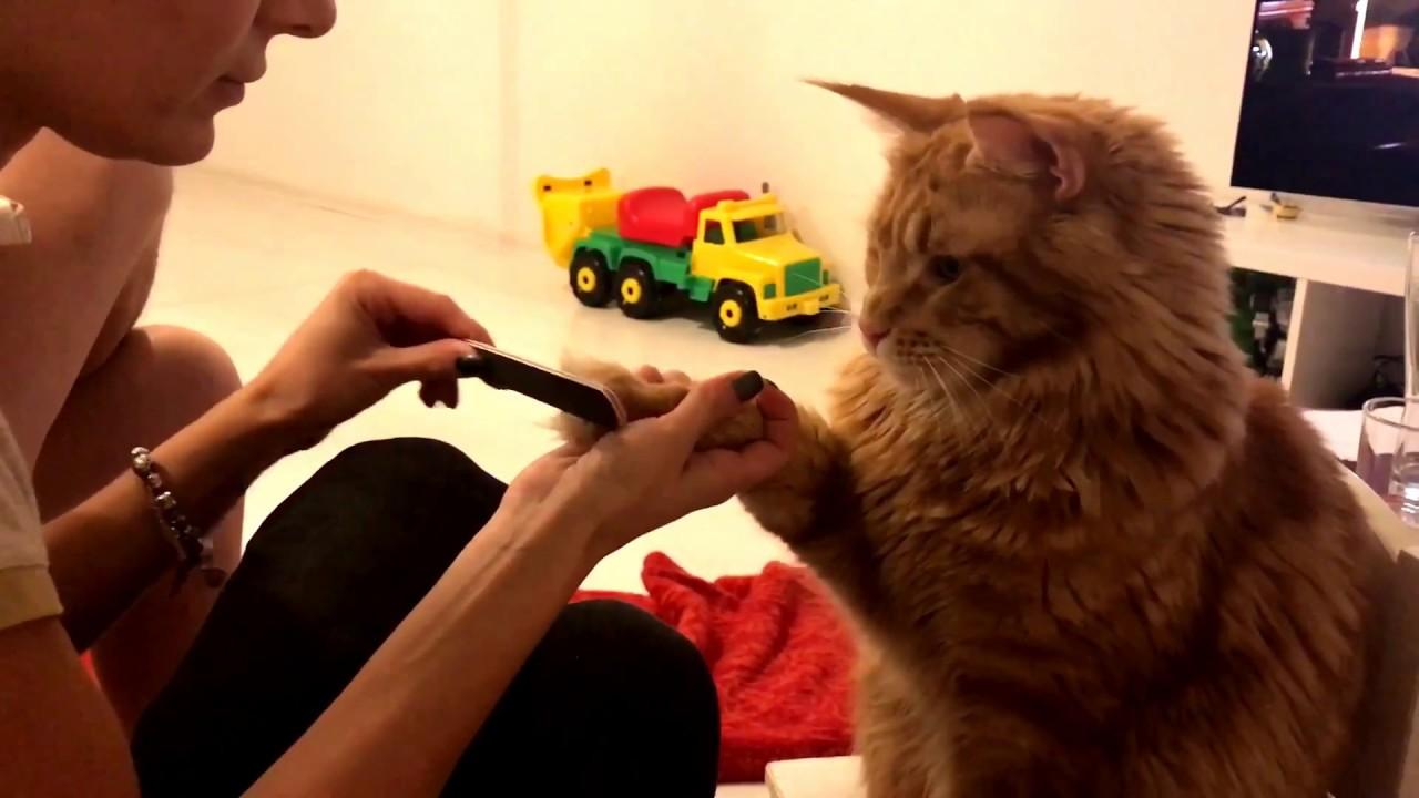 Кот пилит ногти гифка