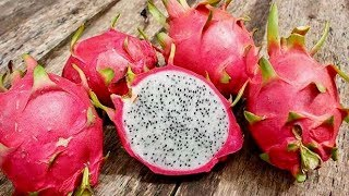 Eat Dragon Fruit For These Incredible Health Benefits