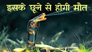 दुनिया के 10 सबसे जहरीले सांप Top 10 Most Dreadful Snakes in the World