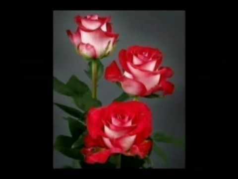 lule te bukura ka tirona youtube