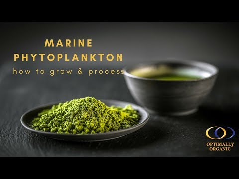 How to Grow and Process Marine Phytoplankton