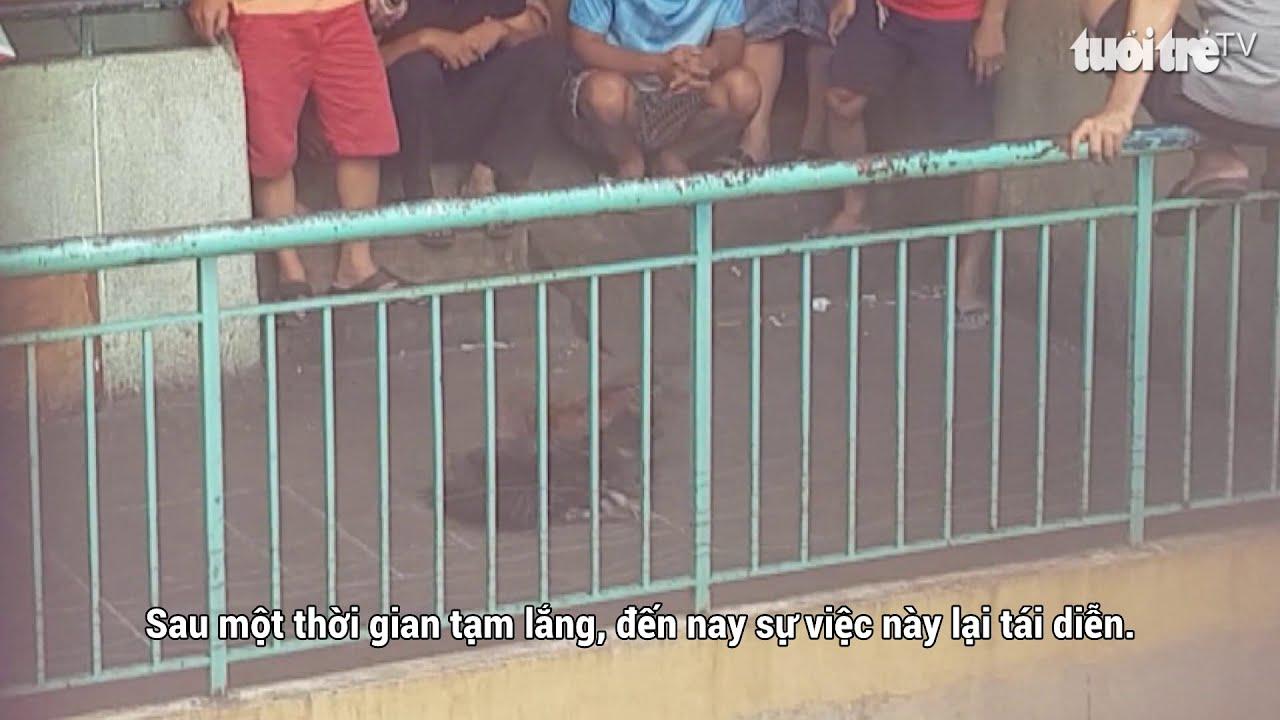 Xử lý tụ điểm đá gà ở chung cư Nguyễn Thiện Thuật
