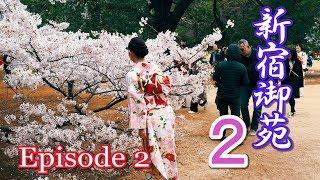 【Cherry blossoms】TOKYO. Shinjuku Gyoen, Episode 2. 2019 #4K #新宿御苑 #ソメイヨシノ thumbnail