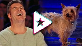 HILARIOUS Dog Acts Go WRONG: Max The Dog Has Ant Running Scared! | Animal Auditions From Got Talent!