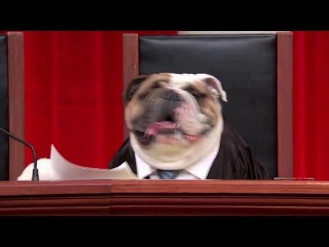 Reichle v. Howards: Oral Argument - March 21, 2012
