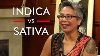 Different Types Of Marijuana (Indica vs Sativa vs CBD)