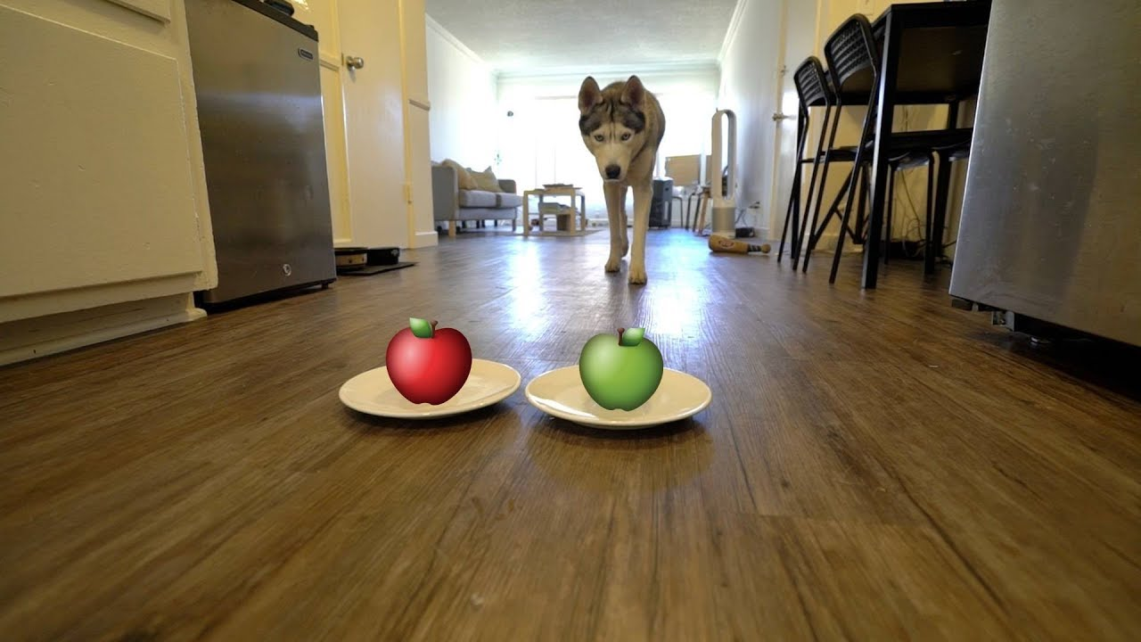 do-dogs-prefer-a-red-apple-or-green-apple