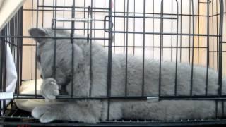 Выставка кошек в Сыктывкаре