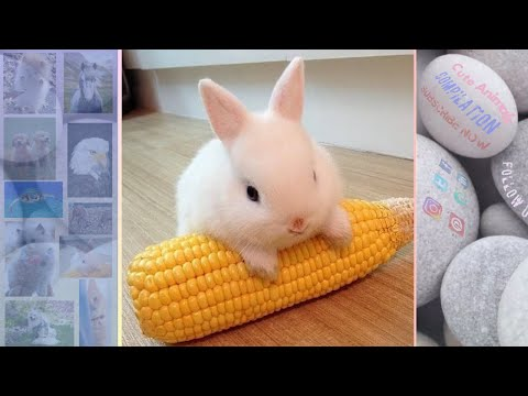 💗Aww - Cutest Rabbits Video Compilation💗 #Ever cute baby animals