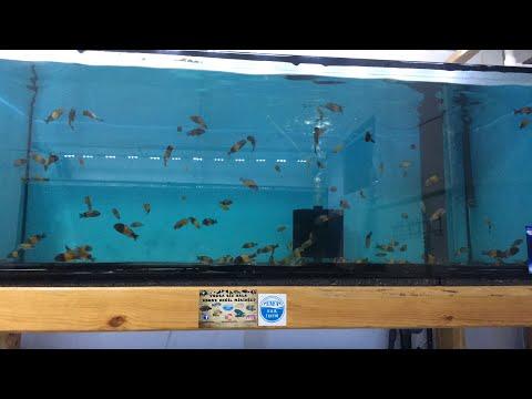 Balık Hakkında Her Şey -Soru Cevap (Canlı Yayın)