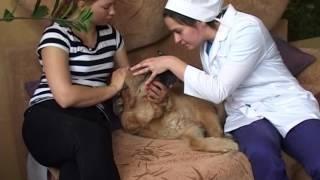 Скорая ветеринарная помощь(, 2016-11-11T09:20:48.000Z)