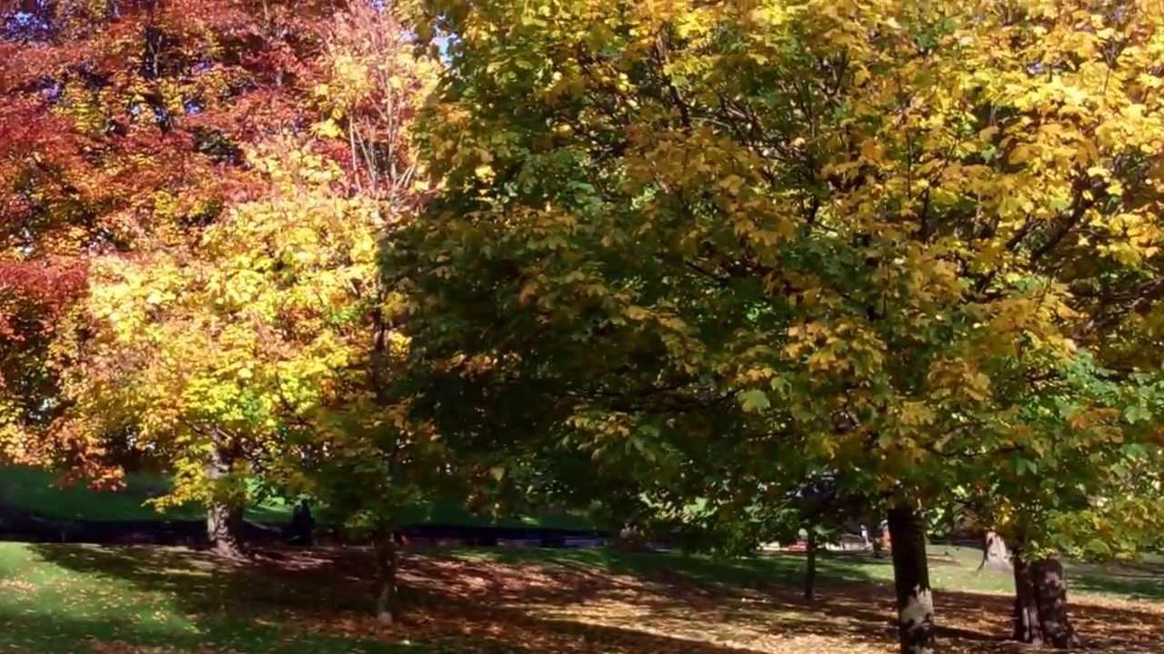 Autumn Princes Street Gardens Edinburgh Scotland - YouTube